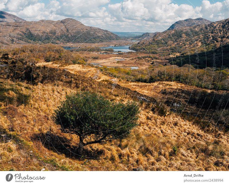 Ladies View - Irland Ferien & Urlaub & Reisen Tourismus Ausflug Ferne Freiheit Sightseeing Landschaft Himmel Wolken Frühling Sommer Baum Gras Sträucher Feld
