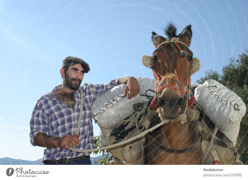 Andalusisches Duo Spanien Andalusien Gesellschaft (Soziologie) ländlich Mensch Esel