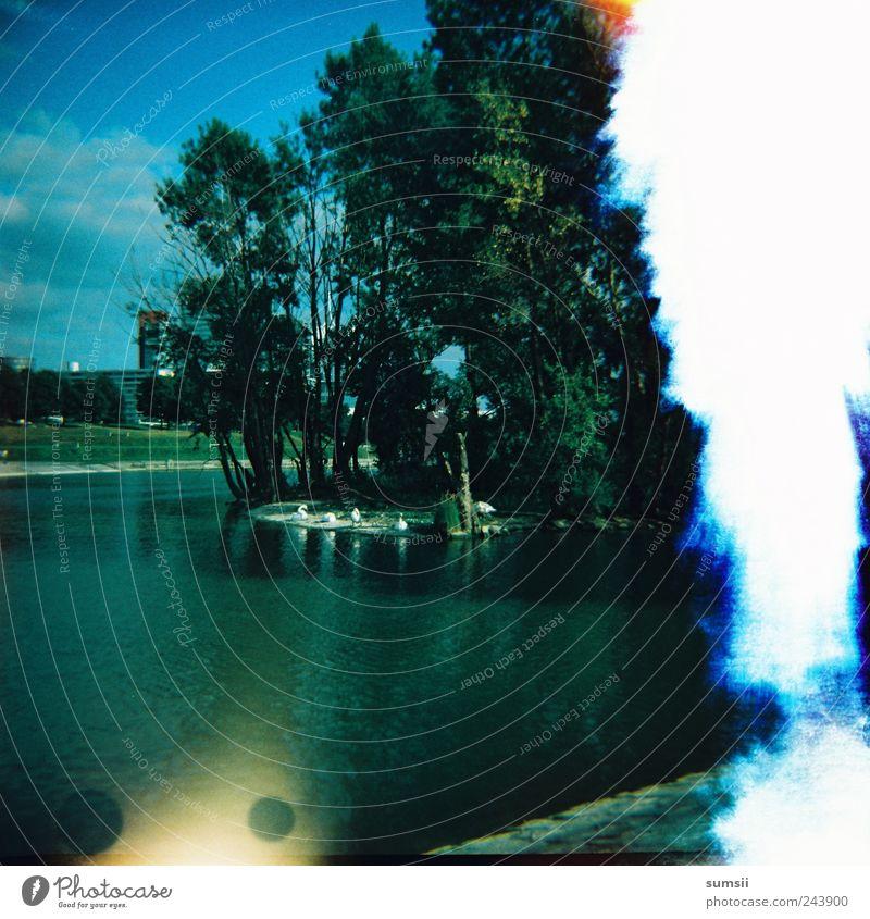 island in the sun Natur Landschaft Wasser Himmel Sommer Schönes Wetter Baum Insel Fluss retro blau grün Light leak diana Quadrat Farbfoto Außenaufnahme