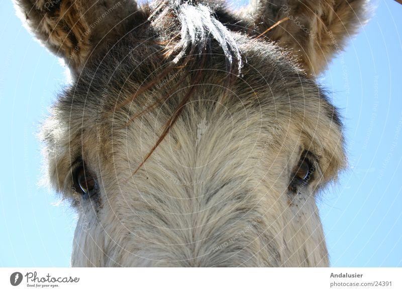 Schau mir in die Augen Natur Tier nah Esel Mensch