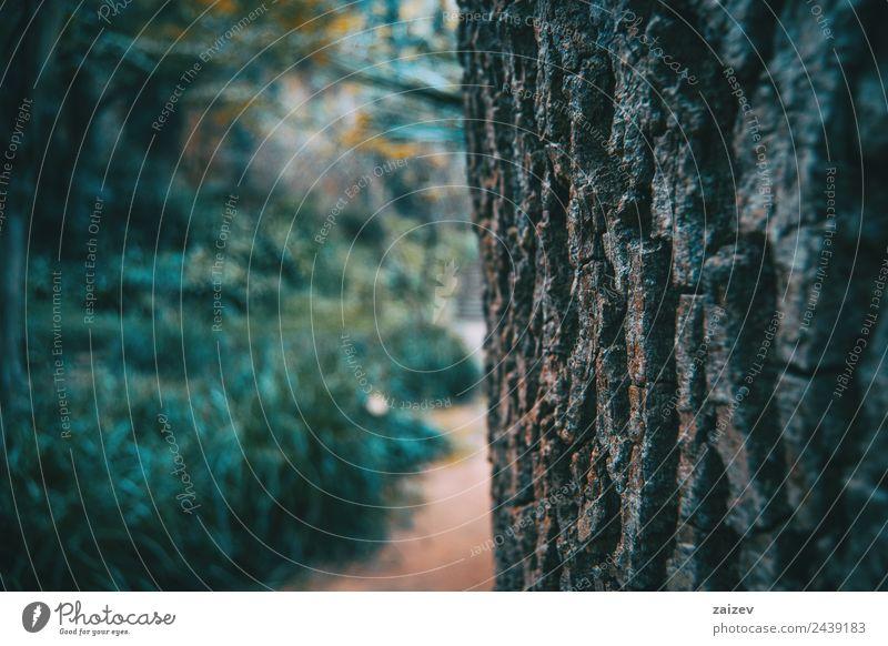 Textur der Rinde eines Baumes in der Natur aus nächster Nähe Berge u. Gebirge Park Wald Papier Rust Hinweisschild Warnschild alt verblüht braun grün weiß