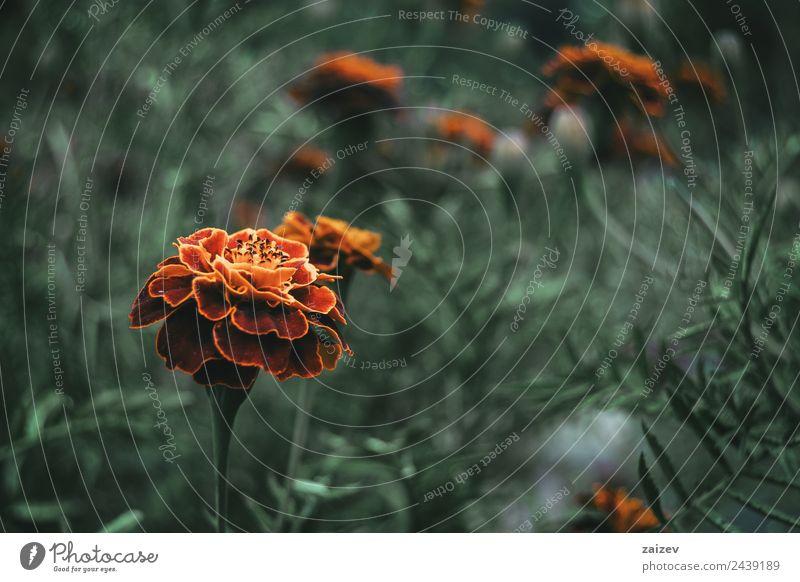 Natur Sommer Pflanze Farbe schön grün Blume rot Blatt Wald Berge u. Gebirge dunkel gelb Umwelt Blüte natürlich