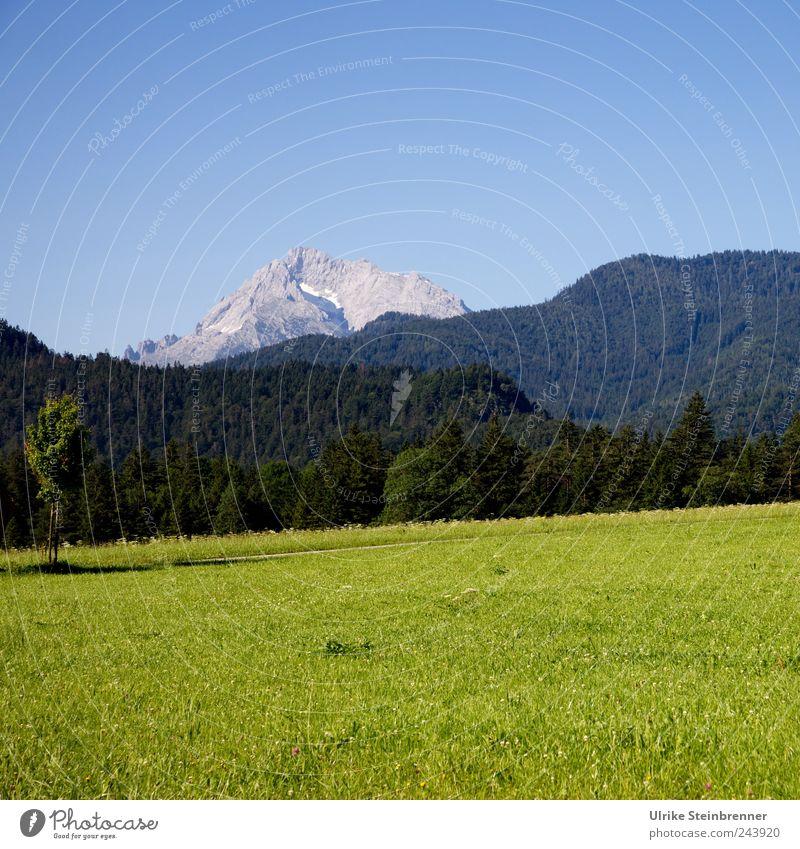 Schau, dort hinten: ein Berg! Natur Landschaft Pflanze Wolkenloser Himmel Sommer Schönes Wetter Baum Gras Sträucher Feld Hügel Alpen Berge u. Gebirge Lofer