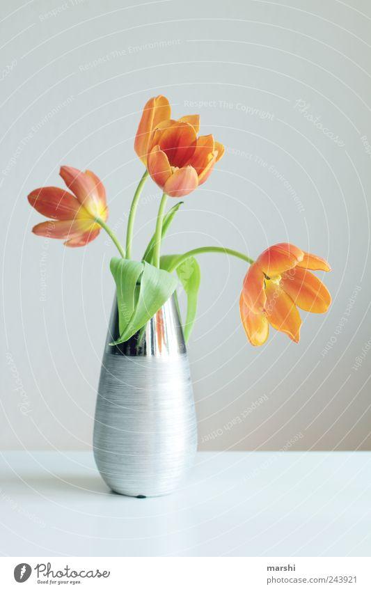 Tulpenpracht Blume Pflanze gelb Blüte hell Dekoration & Verzierung Blühend silber Vase welk