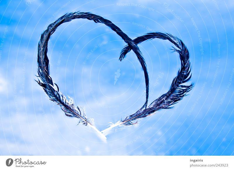 Angelheart Himmel blau weiß Wolken schwarz Liebe Gefühle Glück träumen Stimmung Herz Dekoration & Verzierung Feder Hoffnung Zeichen Romantik