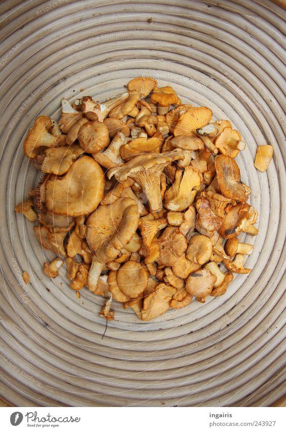 Waldfreunde gelb Holz Ernährung gold Lebensmittel authentisch Kreis rund Gemüse lecker Duft Schalen & Schüsseln Büffet Originalität Vegetarische Ernährung Brunch