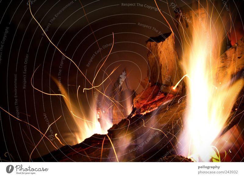 Flammenzunge Natur Sommer Ferien & Urlaub & Reisen gelb Wiese Umwelt Holz braun Feste & Feiern Energie Feuer ästhetisch bedrohlich Warmherzigkeit violett heiß