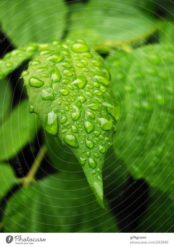 another rainy day Umwelt Natur Pflanze Wasser Wassertropfen schlechtes Wetter Regen Baum Grünpflanze Garten nass Niederschlag Regenwasser Sträucher feucht