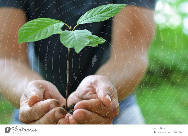Pflanzen Sommer Gartenarbeit Gärtner Landwirtschaft Forstwirtschaft Mensch maskulin Mann Erwachsene Brust Arme Hand 1 Baum Grünpflanze Nutzpflanze festhalten