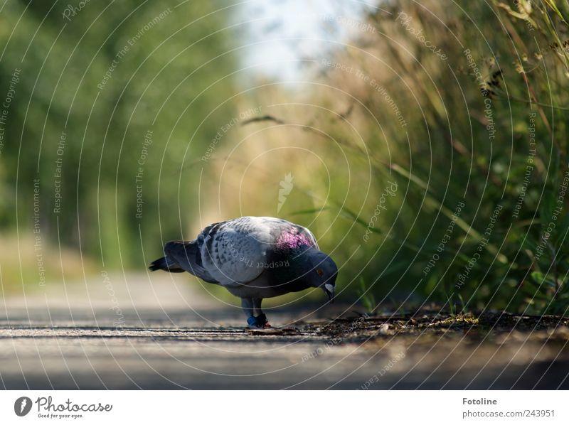 Arbeitsuchend Umwelt Natur Pflanze Tier Urelemente Erde Gras Sträucher Garten Park Vogel Flügel hell natürlich Taube Fressen Feder Farbfoto mehrfarbig