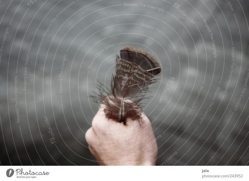 feder Mensch Hand grau braun Feder weich festhalten zeigen Sammlerstück
