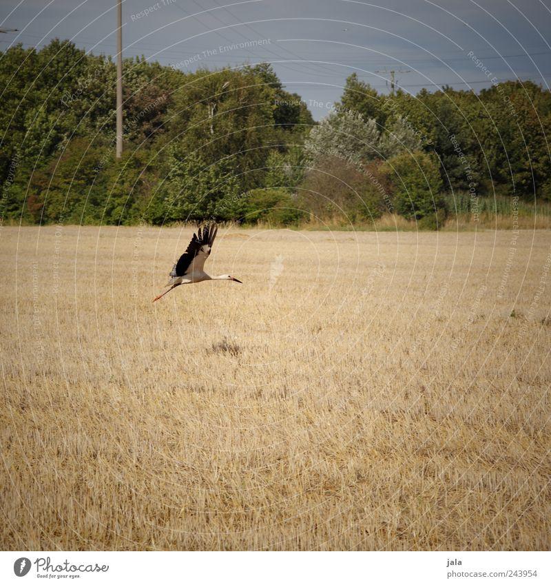 abflug Natur Himmel Baum Pflanze Tier Gras Landschaft Vogel Feld Umwelt fliegen Sträucher Wildtier Storch
