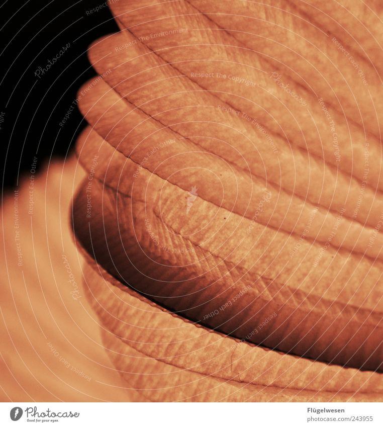 Saturn Stil Lampe Feste & Feiern Freizeit & Hobby Wohnung elegant Design Perspektive Lifestyle Häusliches Leben Romantik Bar leuchten Club Laterne Reichtum