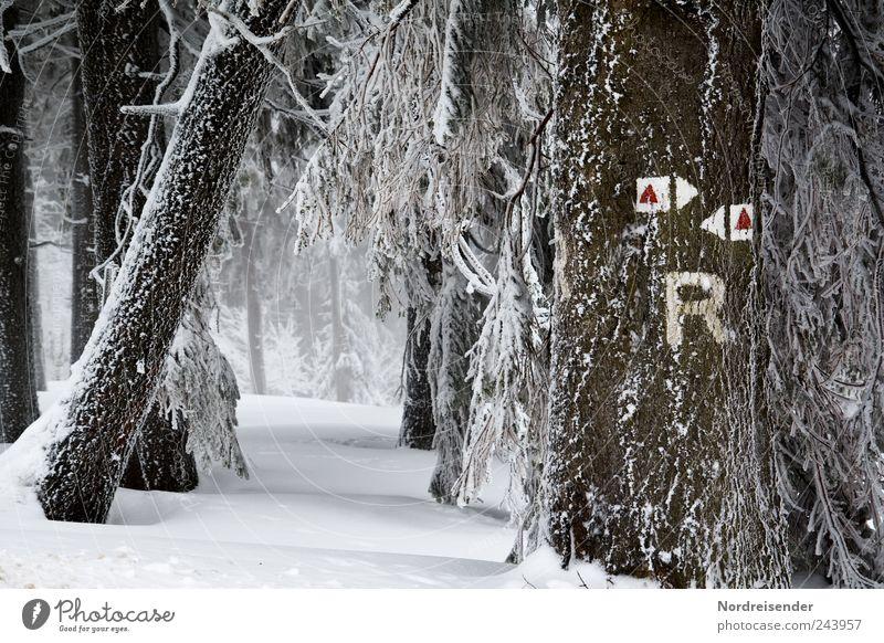Frostige Zeichen Tourismus Winter Schnee Winterurlaub Natur Landschaft Pflanze Klima Eis Baum Wald Wege & Pfade Schriftzeichen Schilder & Markierungen Pfeil