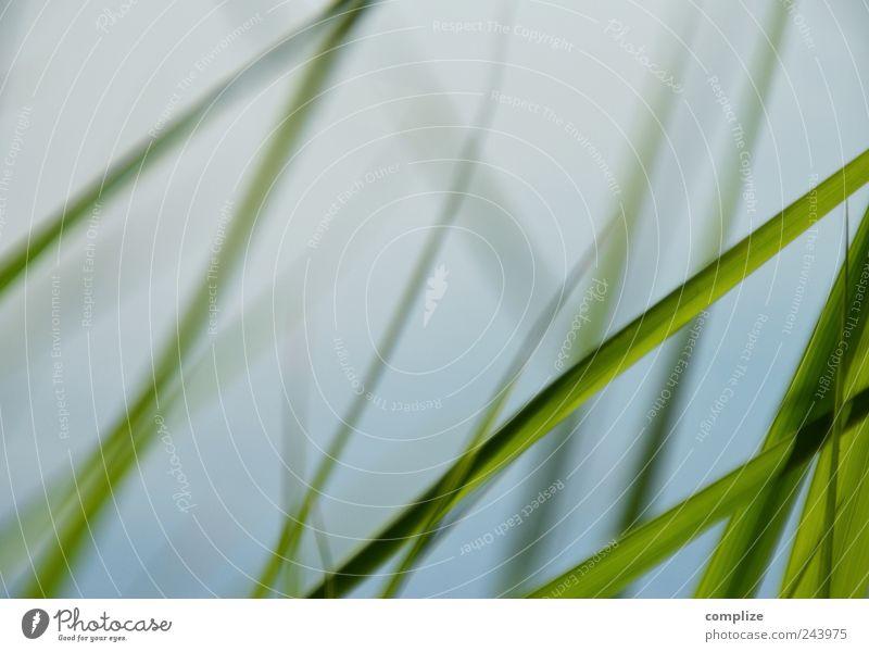 Ufer-Gras Erholung ruhig Spa Ferien & Urlaub & Reisen Pflanze Sträucher Grünpflanze Garten Park Küste Seeufer blau grün Schilfrohr Hintergrundbild Halm
