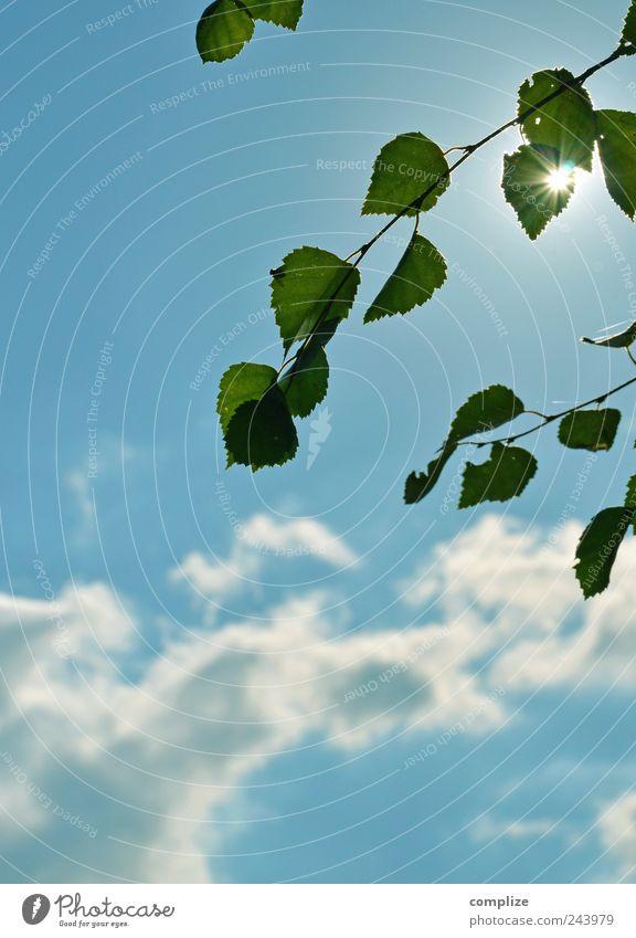 Birke Ferien & Urlaub & Reisen Sommer Sommerurlaub Sonne Strand Himmel Wolken Pflanze Baum Grünpflanze See Glück blau ruhig Idylle Blatt Stern Blendenfleck