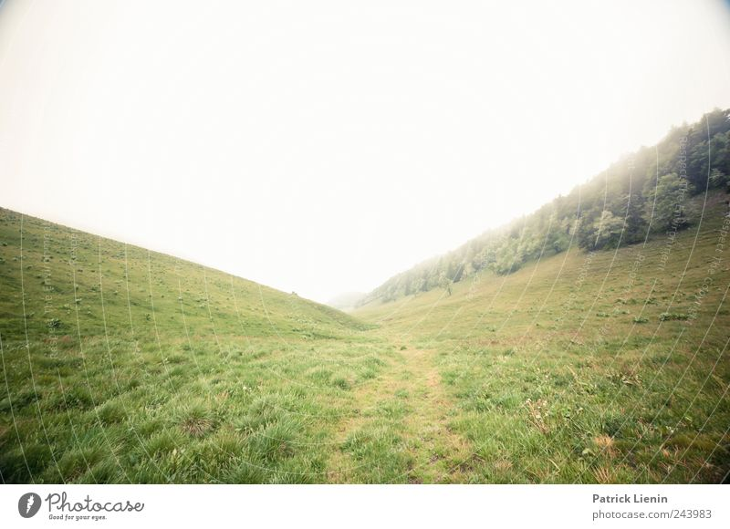Fade And Then Return Freizeit & Hobby Freiheit Berge u. Gebirge wandern Umwelt Natur Landschaft Urelemente Wolken Klima Wetter schlechtes Wetter Wind Nebel Baum