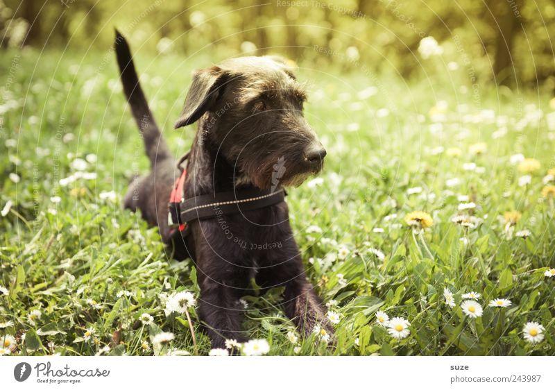 Grashüpfer Hund Natur grün Sommer Tier schwarz Umwelt Wiese Garten liegen natürlich Schönes Wetter niedlich Neugier Freundlichkeit
