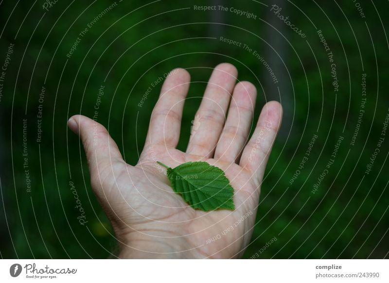 Nature harmonisch Wohlgefühl ruhig Sommer Gartenarbeit Hand Finger 1 Mensch Umwelt Pflanze Klimawandel Baum Grünpflanze festhalten grün Frühlingsgefühle