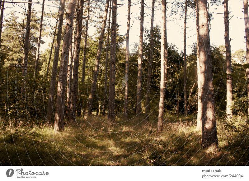 Wald ist es soweit Umwelt Natur Landschaft Pflanze Sommer Schönes Wetter Baum Gras Sträucher Moos ästhetisch frei Unendlichkeit schön Vertrauen Sicherheit