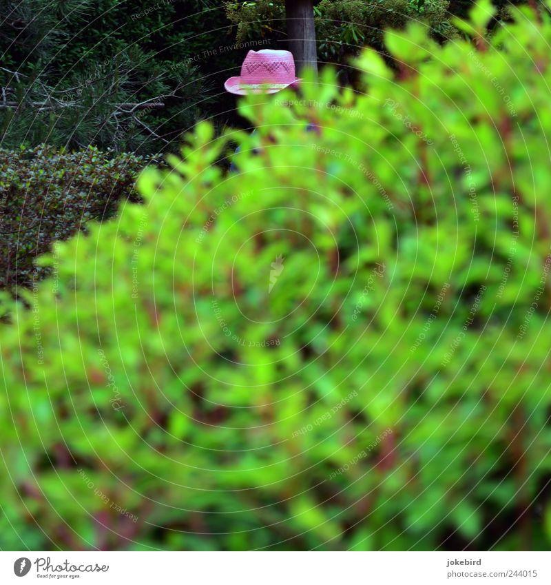 Die schöne Gärtnerin Sträucher Blatt Zierpflanze Hecke Hut grün rosa modern Gartenarbeit Gartenbau Versteck verstecken Strohhut Detailaufnahme markant verborgen