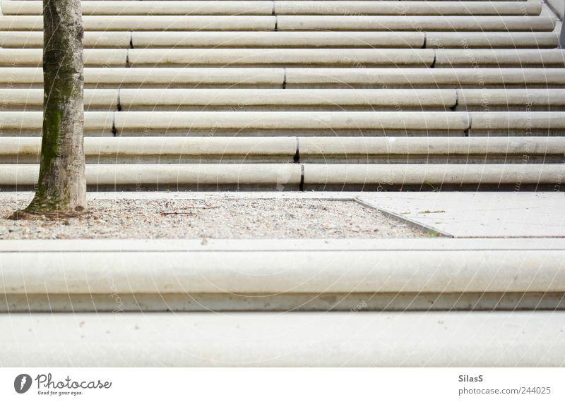 Nr.10 - Der erste Schritt weiß Baum grau braun Treppe aufstrebend