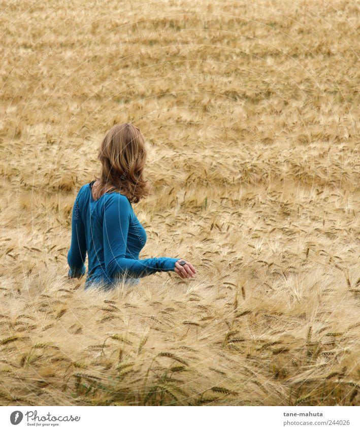 Junge Frau im Gerstenfeld Mensch Jugendliche blau schön Sommer Erwachsene Farbe Erholung feminin Umwelt Deutschland braun Zufriedenheit Feld blond Rücken