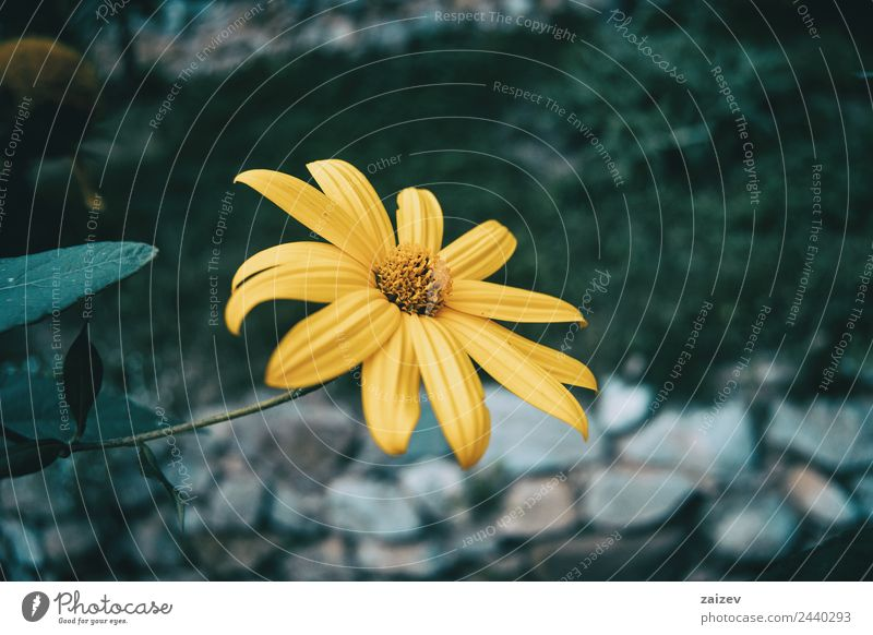 Natur Sommer Pflanze Farbe schön grün Blume Blatt Wald Berge u. Gebirge Umwelt Frühling Blüte natürlich Wiese Garten