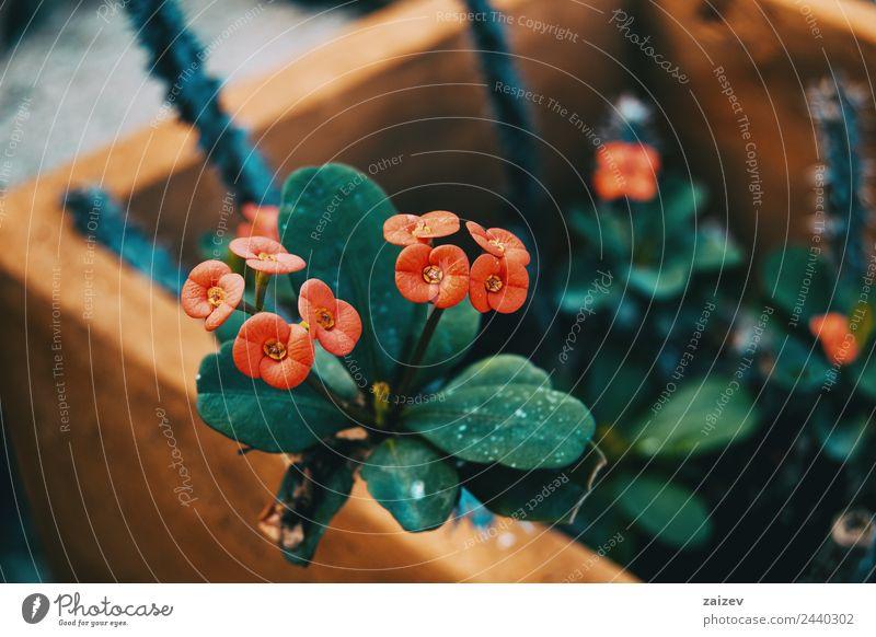 Natur Sommer Pflanze Farbe schön grün Blume rot Blatt Blüte natürlich Wiese klein Garten wild Park