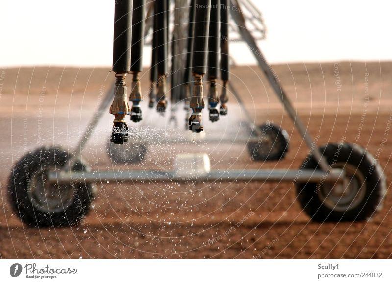 Bewässerung in der Wüste Saudi Arabiens Natur Pflanze Landschaft Gras Regen Erde Arbeit & Erwerbstätigkeit Feld Klima modern Wassertropfen Wachstum Wandel & Veränderung Technik & Technologie fahren Wüste