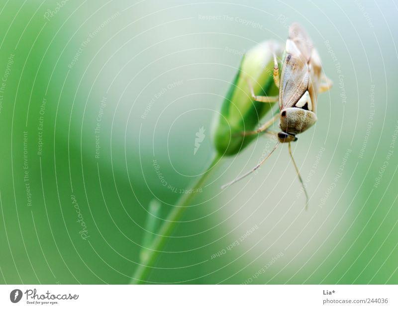 Wanze Blume ruhig Tier Gras Umwelt sitzen Käfer