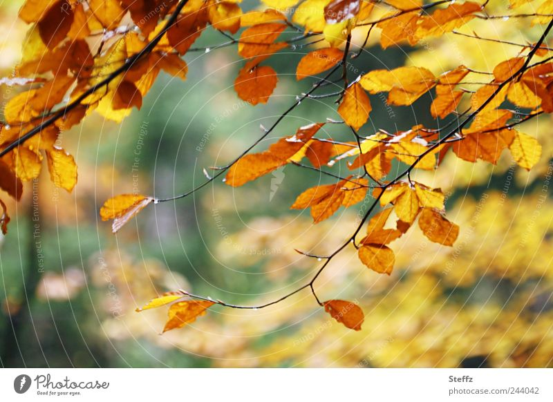 Herbst-Impression Natur Pflanze Farbe Baum Blatt Wald gelb Herbst Ast Schönes Wetter Zweig Herbstlaub herbstlich November Herbstfärbung Oktober