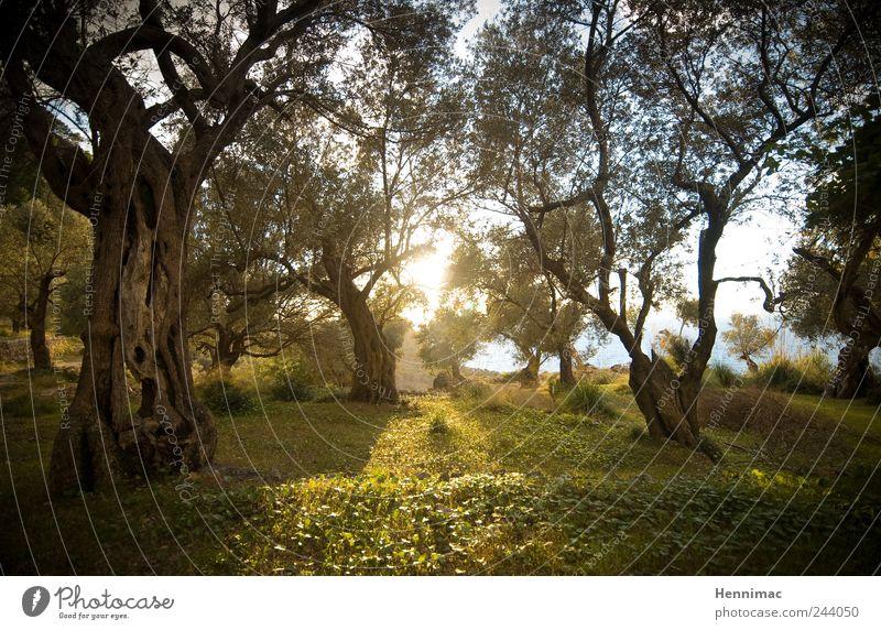 Gethsemane. Natur alt grün Baum Pflanze Sonne Sommer Meer Tier Wald gelb Wiese Holz Gras Garten Frühling