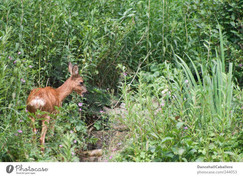 Garten-Safari I Natur ruhig Einsamkeit Tier Gras Glück Park frei Wildtier Sicherheit stehen Sträucher Fluss niedlich Hügel