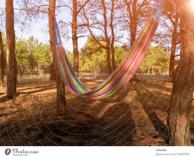 Leere Textil-Hängematte Erholung Ferien & Urlaub & Reisen Sommer Natur Landschaft Pflanze Baum Park Wald genießen gelb grün Stimmung Gelassenheit bequem Farbe