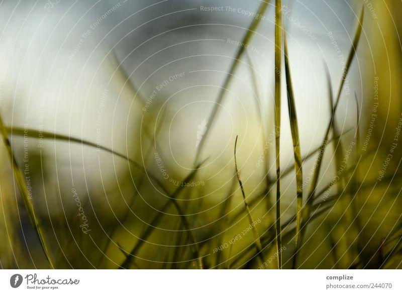Grashalme Himmel Natur blau Pflanze grün Sommer Erholung ruhig Umwelt Wiese natürlich Hintergrundbild Linie Idylle Design