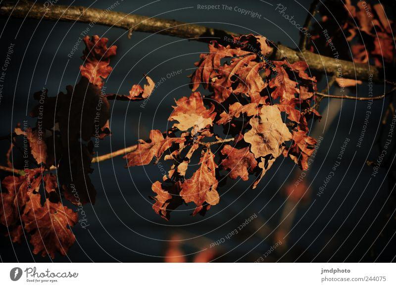 Herbstlaub Natur Pflanze Blume Blatt ruhig Einsamkeit Herbst Umwelt Landschaft Garten Traurigkeit Park natürlich Vergänglichkeit fallen trocken