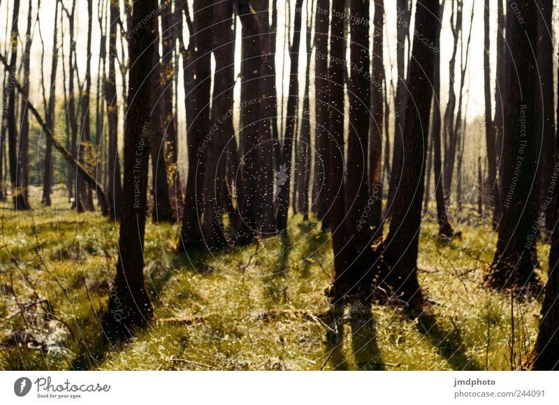 mückenschwarm Natur Pflanze Sommer Baum Landschaft ruhig Freude Wald Umwelt natürlich fliegen Park leuchten Schönes Wetter Gelassenheit heiß