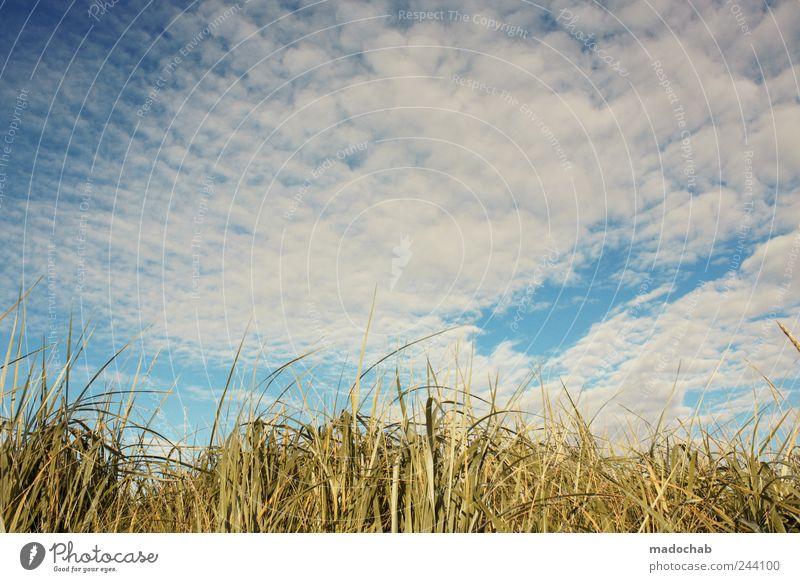 Das Gras ist hoch, man kann kaum blicken. Himmel Natur Ferien & Urlaub & Reisen Pflanze schön Sommer Erholung ruhig Landschaft Wolken Freude Küste Glück Wetter Zufriedenheit Sträucher