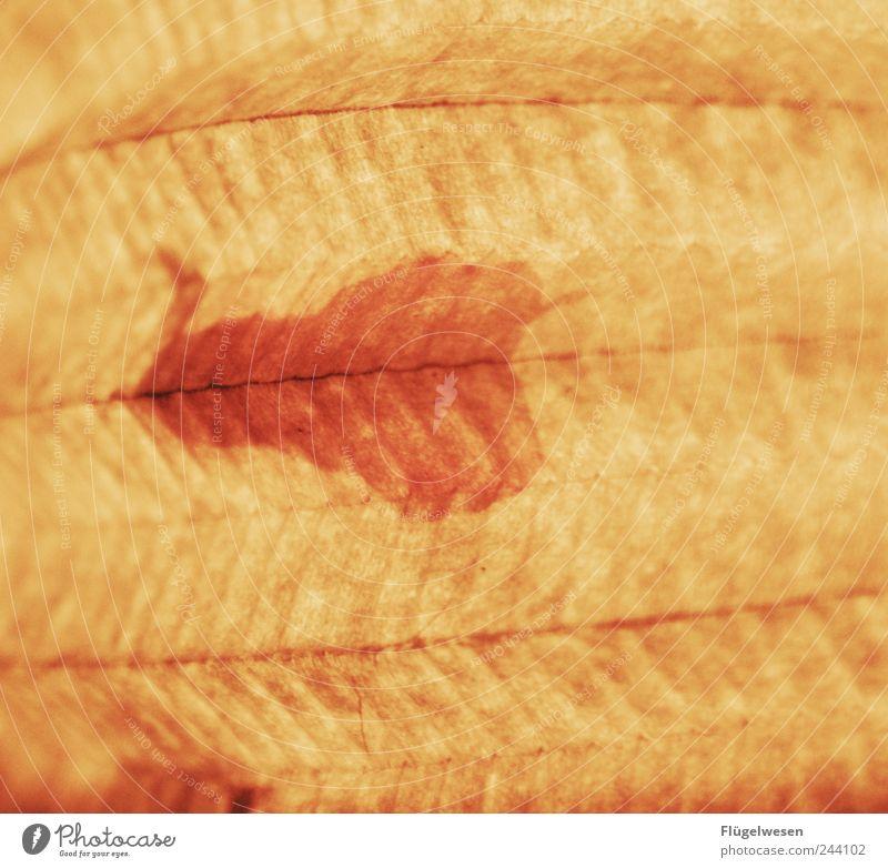 Dr. Motte Hintergrundbild Flügel Bildausschnitt Farbfleck Heterocera