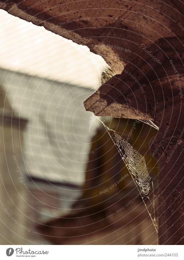 Spinnennetz Natur ruhig Haus Architektur Gebäude Angst dreckig frei natürlich Kirche Netz dünn Bauwerk Burg oder Schloss Appetit & Hunger hängen