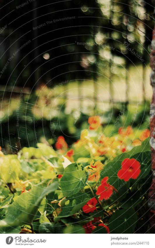 im garten Umwelt Natur Landschaft Pflanze Tier Sonnenlicht Sommer Schönes Wetter Baum Blume Gras Blatt Blüte Garten Park Wiese Fröhlichkeit frisch heiß