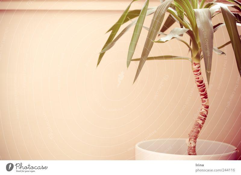 kitchen stories | tropical Pflanze Sommer Kitsch Palme Schrank Grünpflanze Zimmerpflanze Topfpflanze Wohnungssituation