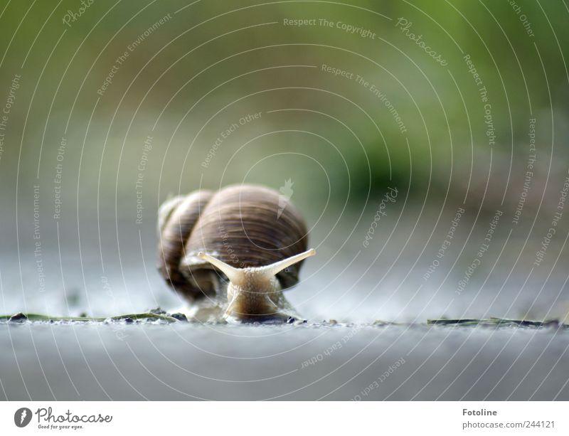 He Schneckchen! Natur Wasser Pflanze Sommer Tier Gras Garten hell Umwelt nass Erde Sträucher natürlich Wildtier Urelemente Schnecke