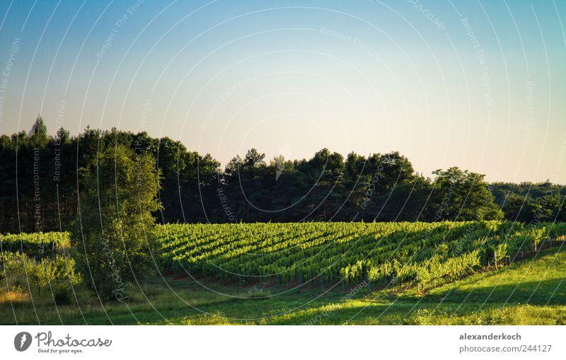 Weinberg Himmel Natur blau grün Sommer Erholung Landschaft ruhig natürlich Tourismus Ausflug Hügel Landwirtschaft entdecken Wohlgefühl Sommerurlaub