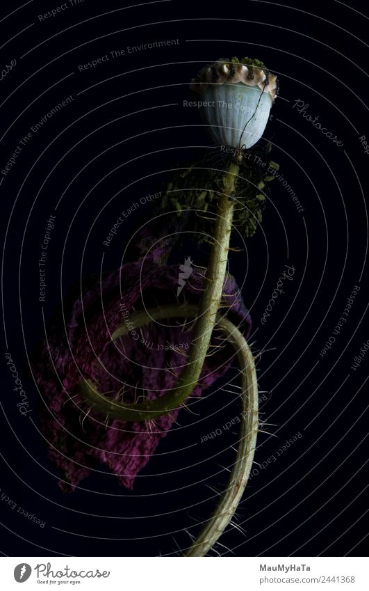 Natur Sommer Pflanze Blume Blatt Blüte Gras Stil Kunst Tod Design träumen elegant Kraft Kultur chaotisch