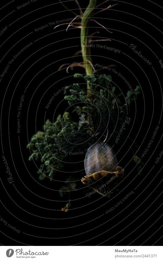 Mohn in schwarz Natur Pflanze Sommer Blume Gras Blatt Blüte Wildpflanze chaotisch elegant Ende Kraft Stil Tod Tradition träumen Traurigkeit Farbfoto