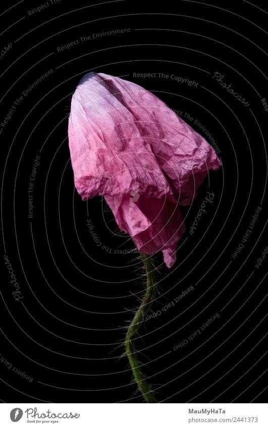 Natur Sommer Pflanze Blume Blatt Blüte Traurigkeit Gras Mode träumen Macht exotisch Reichtum Sinnesorgane Überleben Wildpflanze