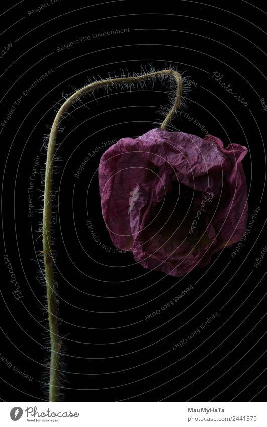 Natur Sommer Pflanze Blume Blatt Blüte Traurigkeit Gras Stil Tod träumen Kontakt Überraschung Reichtum Qualität Wildpflanze