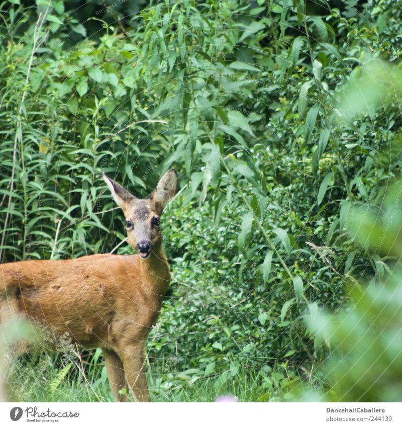 Garten-Safari II :-p Natur schön grün Pflanze Sommer Freude Einsamkeit Tier Frühling Garten Glück Park braun Angst frei Fell